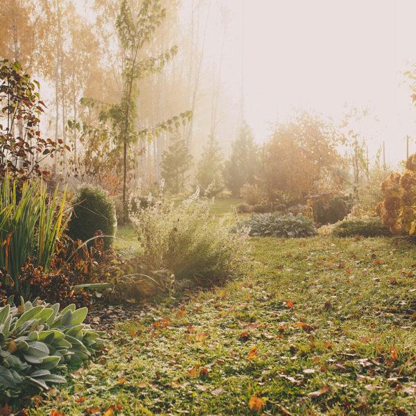 Winter Garden Maintenance Worcestershire