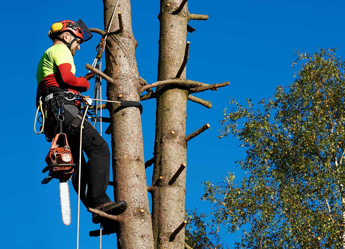 Tree Surgeon Malvern Worcestershire