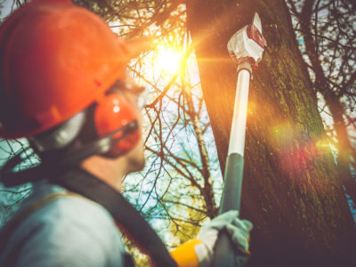 Tree Surgeon In Worcestershire